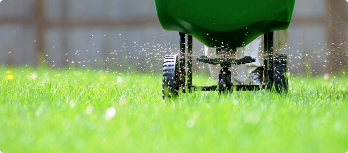 Lawn Fertilizing Tips For A Beautiful And Healthy The